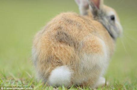 reversed rabbit